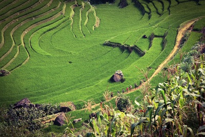 Tiered Rice Field View