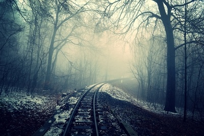 Train Rail in Between of Bare Trees