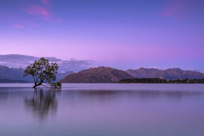 Tree in Water Near Mountains