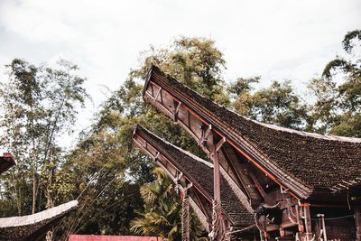 Trees And Indonesian Architecture