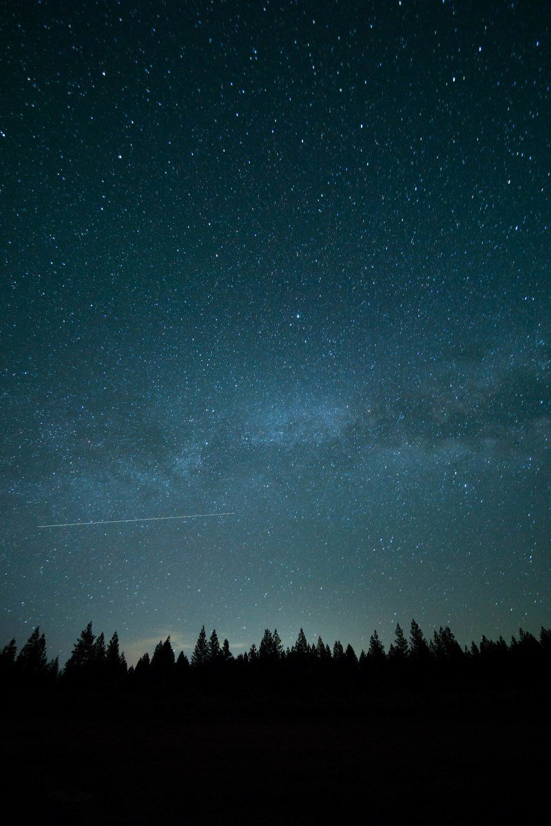 Trees  And Stars at Nighttime