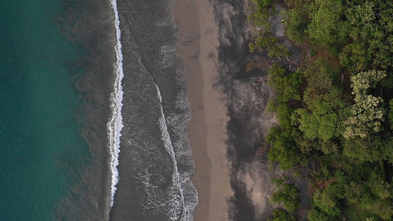Trees Lining Tempestuous Beach