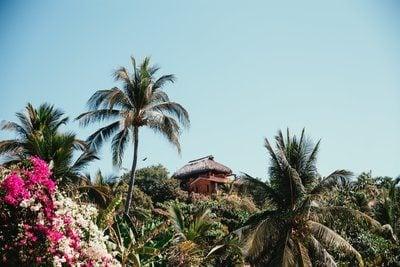 Tropical Hut With Palmtrees