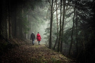 Two Person Walking in Forest