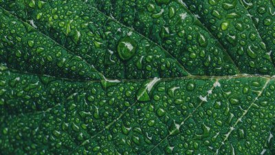 Water Droplets On Green