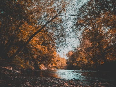 Water Surrounded of Brown Trees