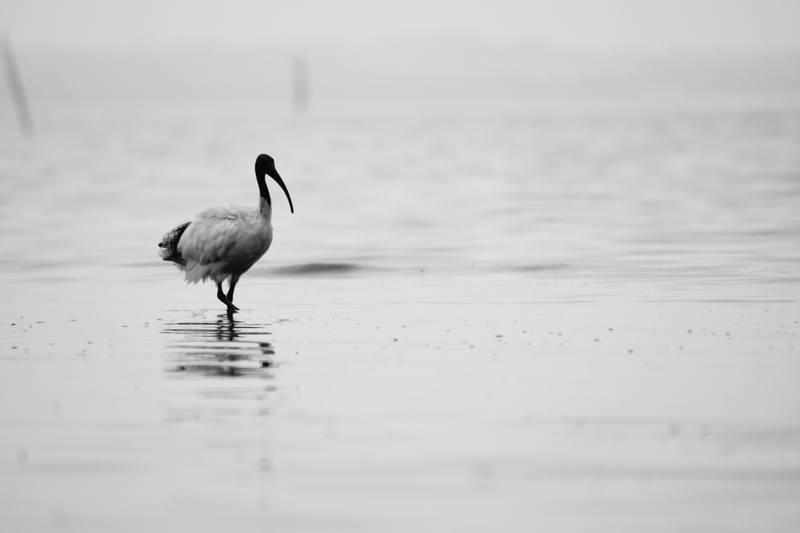 White And Black Bird in Water