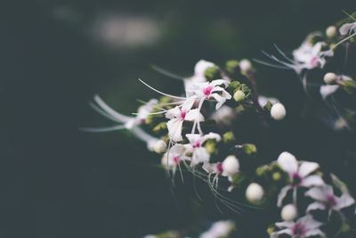White Petaled Flowers in Closeup