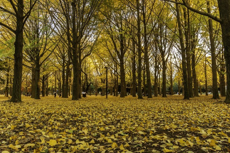Yellow Fall Leaves And Trees
