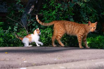 Chatons jouant