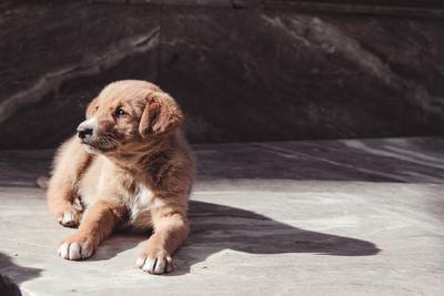 Small brown doggy