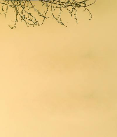 Yellow background with twigs