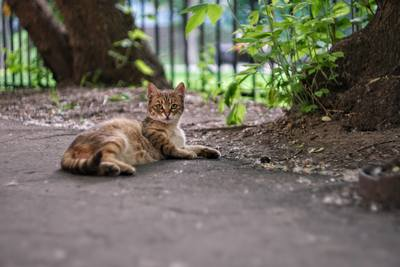 Cat laying on the road