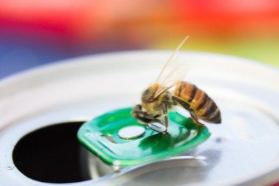 Bee on a can